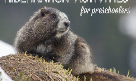 Hibernation Activities for Preschoolers – Teaching Mama