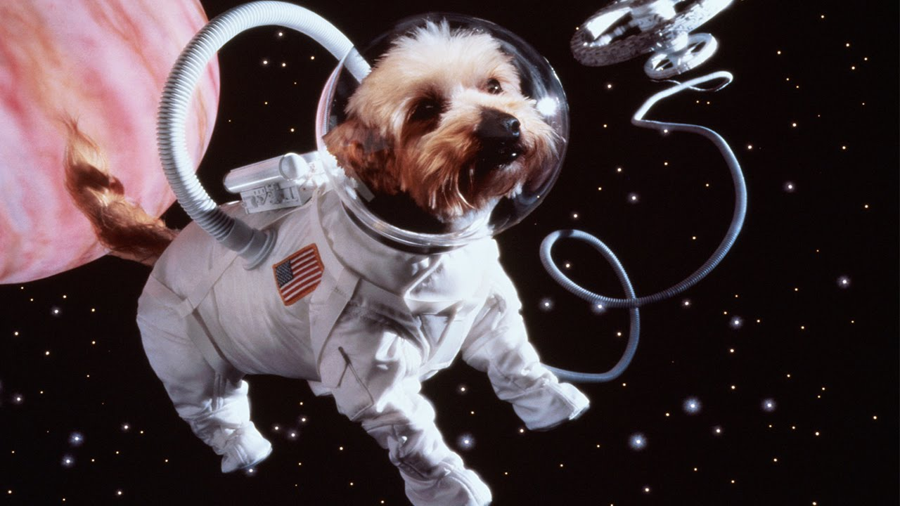 10 Animals Who Went To Space 36