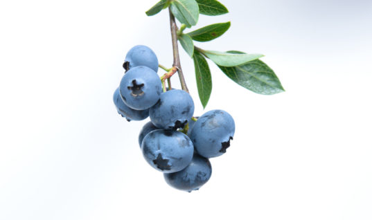5 Reasons to Add Blueberries To Your Skincare Routine  – GLOW RECIPE