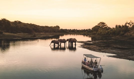 The Top Safari Destinations in Africa / The Blonde Abroad