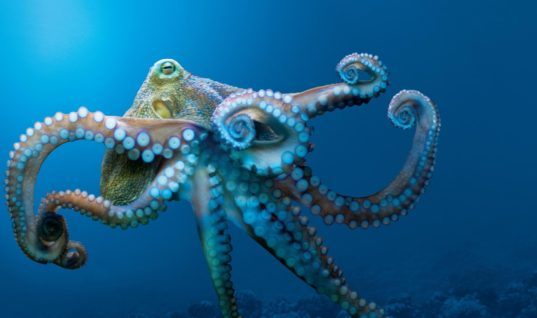 Scientists Believe Octopuses Are Aliens From Space That Arrived To Earth On Icy Bodies