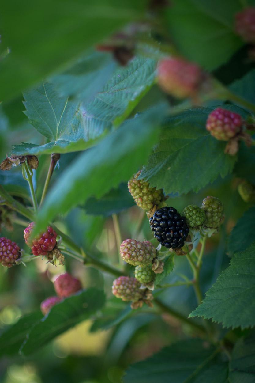 Blackberry Crisp with Maple, Bourbon and Rye 1