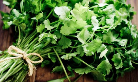 "Learn About Cilantro: One of the World's Most Powerful ""Superherbs"""