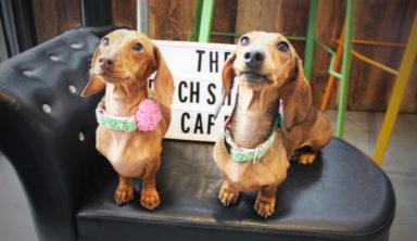 Totally New Dachshund Dog Café in London
