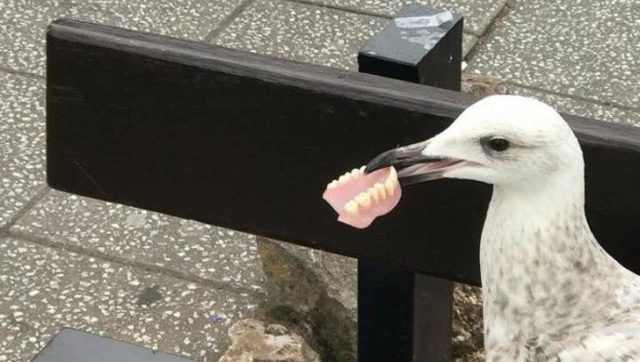 Seagull and false jaw
