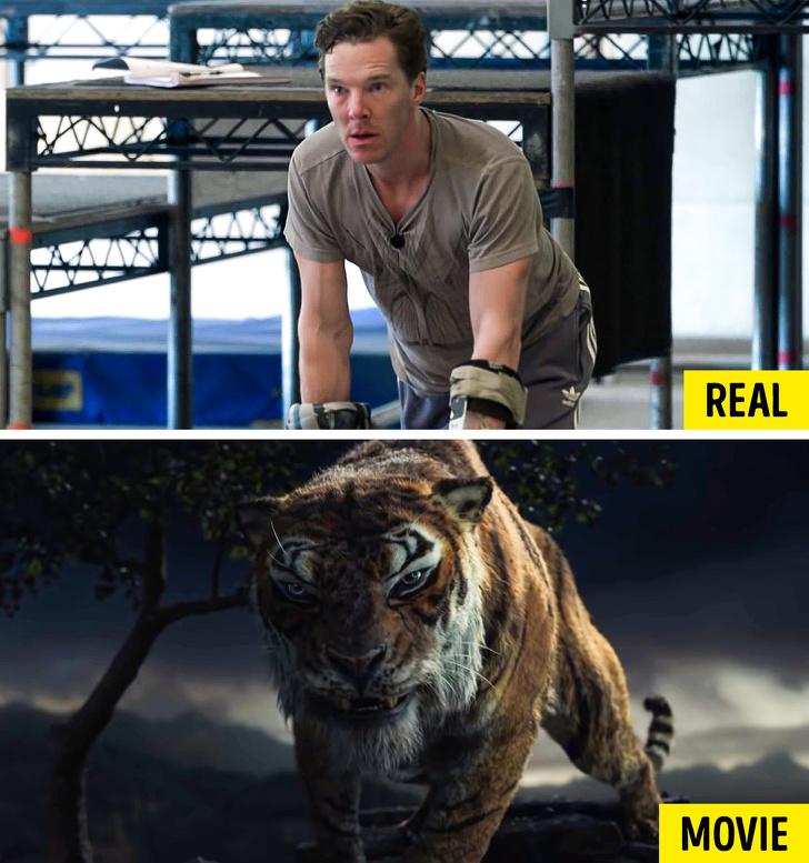 Mowgli Tiger