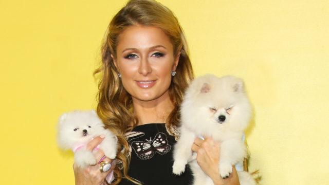 Paris Hilton with Dogs