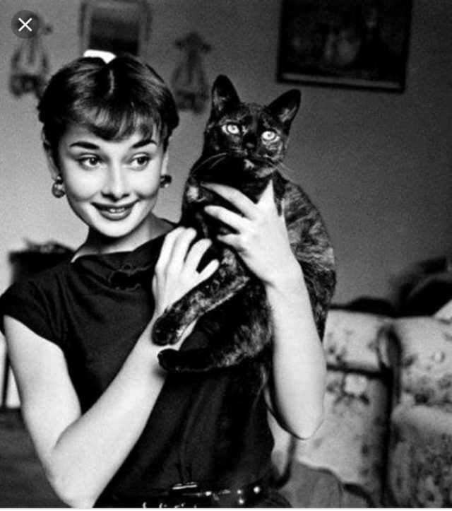Audrey Hepburn with a cat in her arms