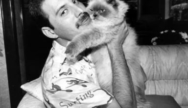 How cute! 10+ Photos of  Celebrities with Favorite Cats. Freddie Mercury, Marilyn Monroe and Michael Jackson.