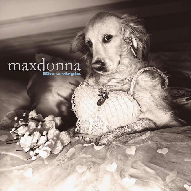 Maxdonna! Don't Miss Madonna's Inspired Iconic Photos With Photographer's Dog 31