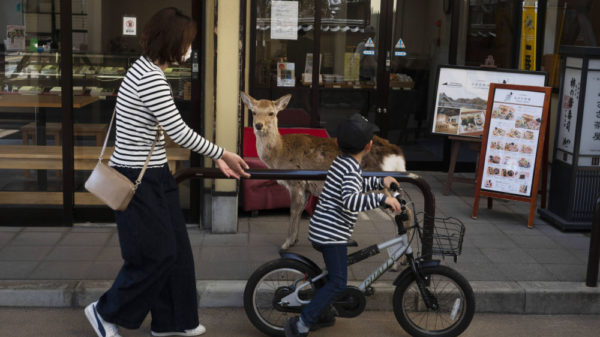 While people are quarantined, wild animals take to the streets 29