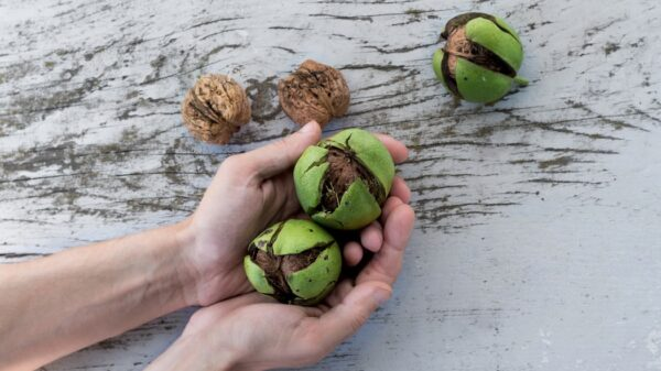 4 Undeniable reasons to enjoy walnuts as often as possible 12